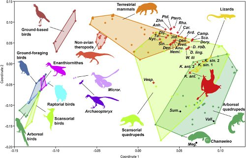 A new darwinopteran pterosaur reveals arborealism and an opposed thumb