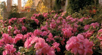 Landscaping with Encore® Azaleas