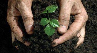 How to Fertilize Encore® Azaleas
