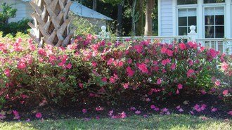 Create Enticing Garden Settings With Intermediate Encore® Azaleas