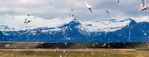 Climate change threatens winged harbinger of spring