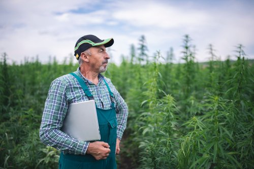 4 Ways to Achieve Longevity in the Cannabis Business