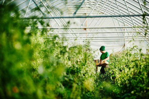 3 Sustainability Trends Driving Change in the Food and Nutrition Industry