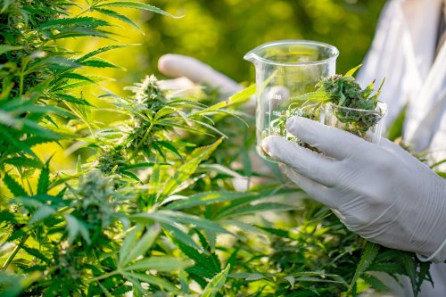 Most Of The $1.5 Billion Spent on Cannabis Research Went To Studies Telling People How Bad It Is For Them