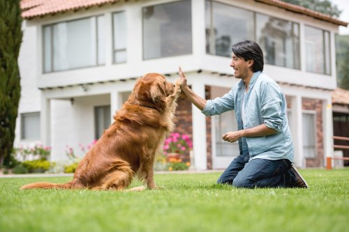 The 6-Figure Solopreneur World: How Much Can You Make as a Dog Trainer or Therapist?