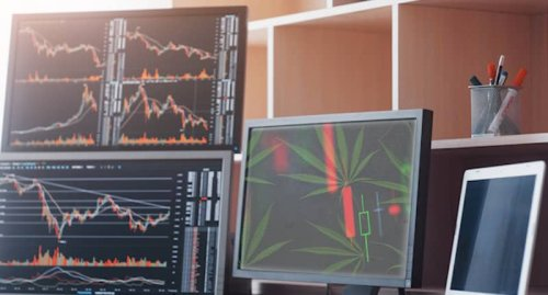 Best US Marijuana Stocks To Buy Right Now? 3 Top Cannabis Stocks With Triple Digit Gains Forecast