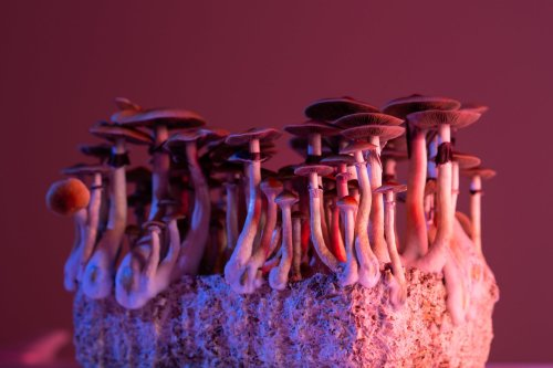 This Is the Real Story Behind Why Shrooms Are Illegal