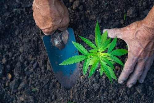 How to Stock up and save on Marijuana and Hemp Cultivation Supplies