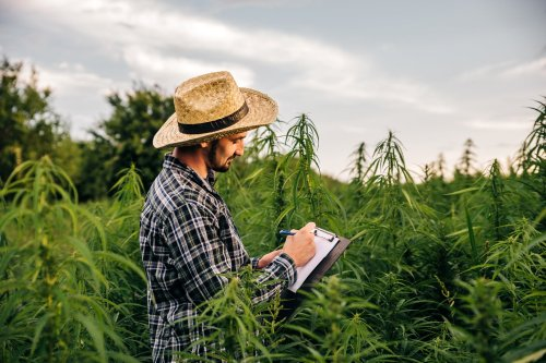 The 7 Most Desired Skill Sets in Cannabis Right Now