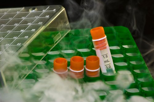 The New Pfizer Vaccine Needs Plenty of Cold Storage, but Will There Be Enough Dry Ice?