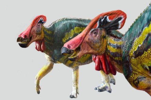 Mexican archaeologists find new species of 'talking dinosaurs'