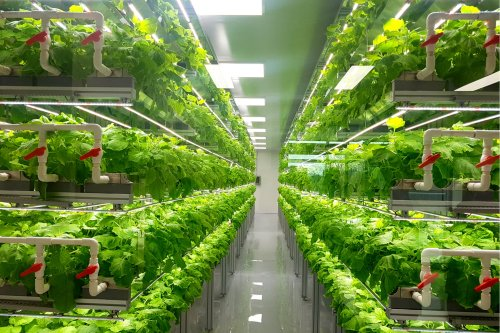 Building New Ecosystems: The Food Tech Revolution Is Here