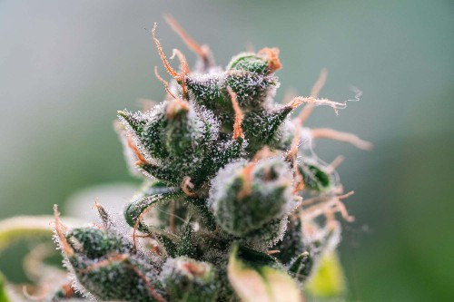 Why Does Everyone Keep Talking About Terpenes?