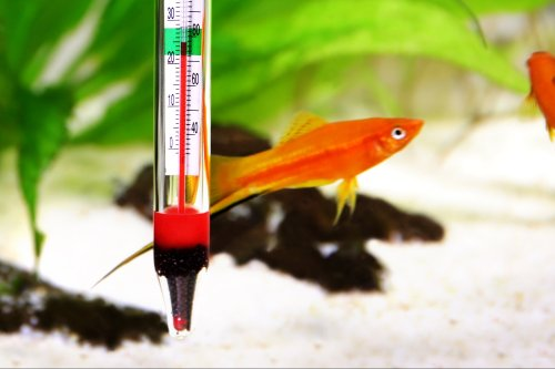 A Casino Gets Hacked Through a Fish-Tank Thermometer