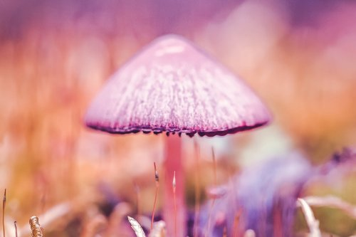 Shrooms vs. Acid: What's the Difference?