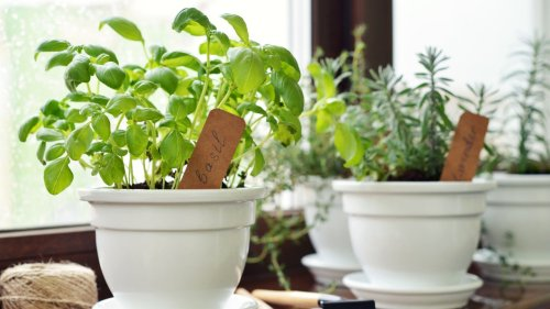 How to Have a Thriving Kitchen Herb Garden