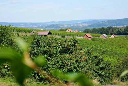 Der Fränkische Rotwein Wanderweg: Wandern im Zeichen des Rotweinglases