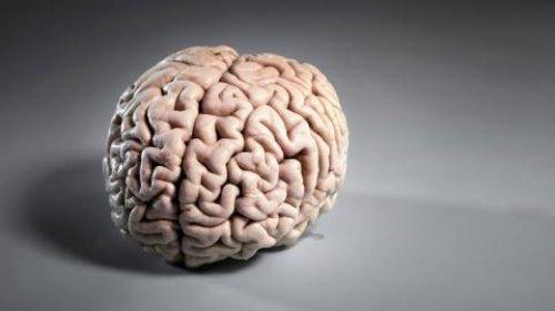 Qué le pasa a tu cuerpo si comes un cerebro humano