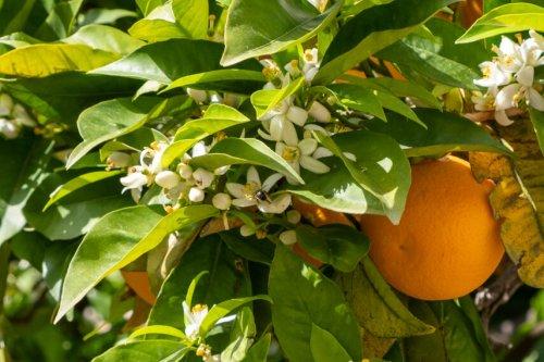The scent of spring on Mallorca: Happy Easter! - Estilo Palma