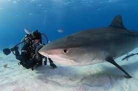 Discovery+ Picks Up Eli Roth's 'Dangerous' Shark Documentary 'FIN'