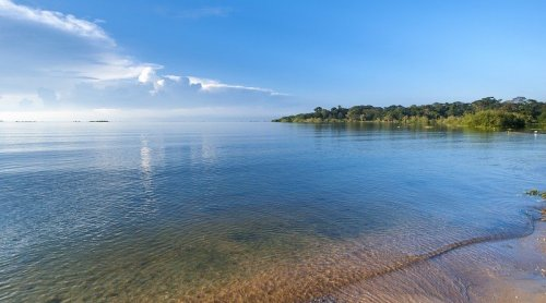 The End Of Darwin's Nightmare At Lake Victoria?