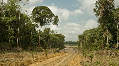Greenpeace: Hundreds Of Palm-Oil Firms Operate Illegally In Indonesian Forests