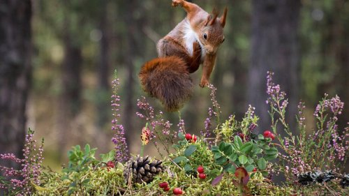How Squirrels Learn To Leap And Land Without Falling