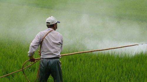 Glyphosate Pesticides Persist For Years In Wild Plants And Cause Flower Infertility