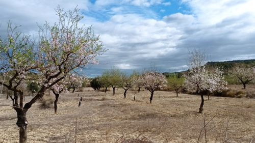 Introduction Of Perennial Plants Among Rainfed Almond Trees Helps To Mitigate Climate Change