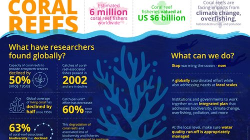 Coral Reefs Are 50% Less Able To Provide Food, Jobs, And Climate Protection Than In 1950s, Putting Millions At Risk