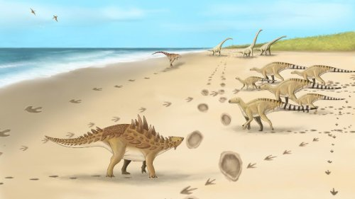 Footprints Discovered From Last Dinosaurs To Walk On UK Soil