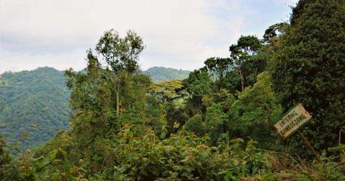 Ouganda : la forêt Bwindi préservée par le reboisement | Africanews