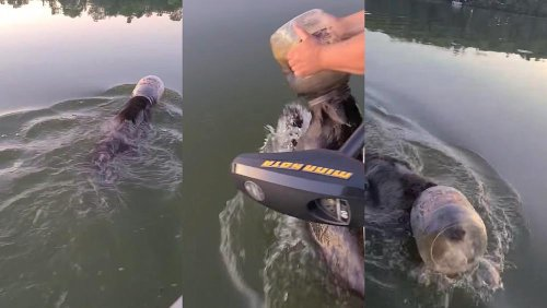 Viral video shows family rescuing bear with head trapped inside plastic container