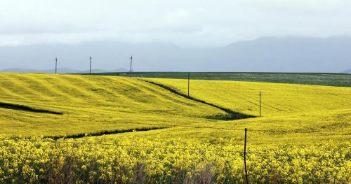 Afrique du Sud: réinventer l'agriculture, sans pesticides ni machines | Africanews