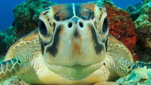 Turtles are being born with deformities due to toxic chemicals in the Great Barrier Reef