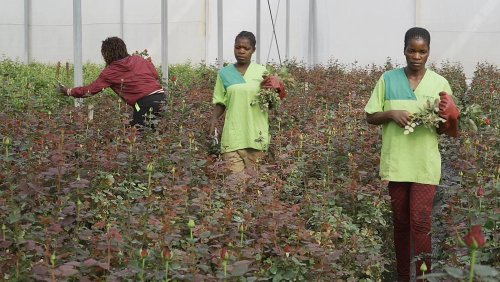 The two family-owned businesses in Angola beating the pandemic