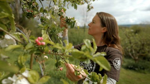 This community seed program is ensuring the future of food in Ireland