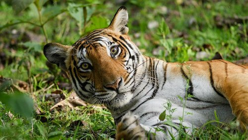 The new 'Big 5' are the animals we need to protect, not harm, the most