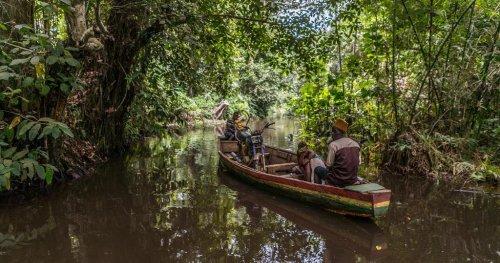 Bénin : la forêt marécageuse de Hlanzoun menacée de disparition | Africanews