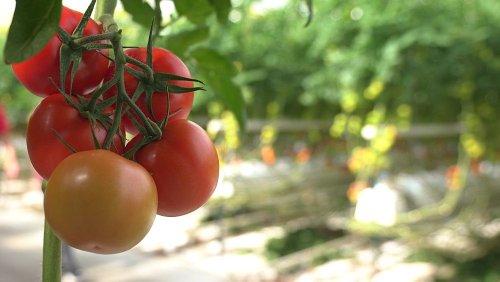 The sustainable farming methods helping farmers earn a fair income