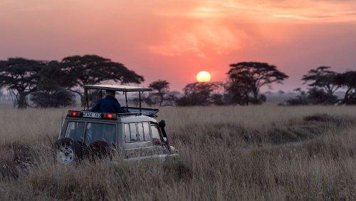 Four alternative safari destinations outside Africa for wildlife enthusiasts