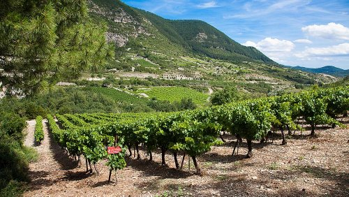 These are the best winery tours in France