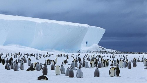 New penguin colonies in Antarctica spotted by satellites in space
