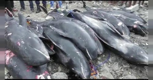 Dead Dolphins washed ashore in Ghana raise concerns | Africanews