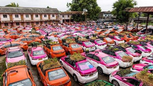 Bangkok: Gemüsegärten und Froschteiche gedeihen auf abgestellten Taxis