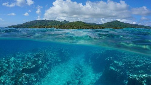 What is ocean rewilding and how will it fight climate change?