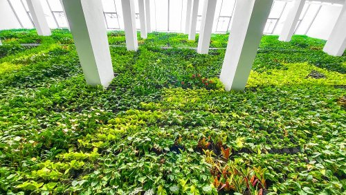 This old tobacco factory is now Europe's biggest indoor vertical garden