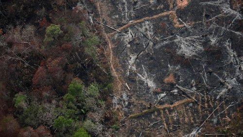 Amazonas-Regenwald spuckt Kohlendioxid