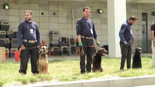 Von USA zurückgelassen: Hunde am Flughafen Kabul finden neue Herrchen