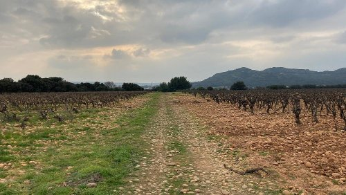 Wines of the Southern Rhone Valley: Romans, Aliens, and grapes from Colonel Gaddafi